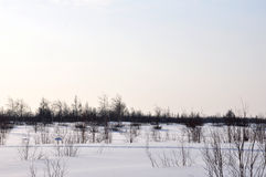 Día de invierno y landskape escarchado del norte Árboles desnudos, pinos y nieve blanca imagenes de archivo