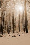 día de inviernos frío Fotografía de archivo libre de regalías
