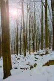 día de inviernos frío Foto de archivo libre de regalías