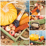 Día de la acción de gracias: Bandeja con la calabaza y diversas verduras maduras dentro Fotografía de archivo