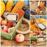 Día de la acción de gracias: Bandeja con la calabaza y diversas verduras maduras dentro Fotos de archivo
