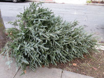 Día de la basura para los árboles de navidad fotos de archivo