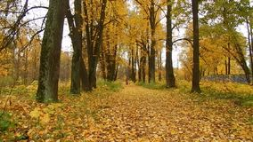 Día de la caída de la hoja del otoño en la reserva de naturaleza en el bosque almacen de video