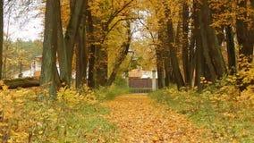 Día de la caída de la hoja del otoño en la reserva de naturaleza en el bosque metrajes