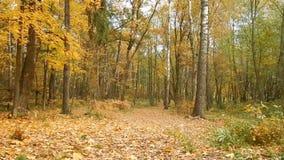 Día de la caída de la hoja del otoño en la reserva de naturaleza en el bosque almacen de metraje de vídeo