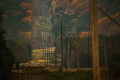 Día de la caída de la línea eléctrica Fotos de archivo