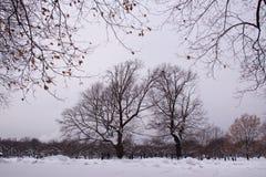 Día de la nieve del invierno de Moscú Rusia en un parque de la ciudad imagen de archivo libre de regalías