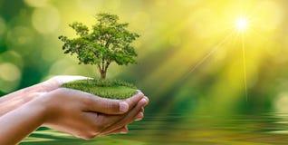 Día de la Tierra del ambiente en las manos de los árboles que crecen almácigos Bokeh pone verde la mano femenina del fondo que so