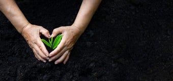 Día de la Tierra del ambiente en las manos de los árboles que crecen almácigos Bokeh pone verde la mano femenina del fondo que so fotos de archivo libres de regalías