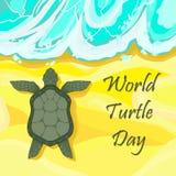 Día de la tortuga del mundo 23ro mayo - la tortuga se arrastra a lo largo de la arena a Imagen de archivo libre de regalías