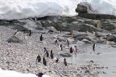 Día de los pingüinos en la playa Imagen de archivo