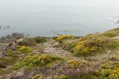 Día de niebla en la costa con la hierba verde en las rocas Crozon, Francia 29 de mayo de 2018 Fotografía de archivo libre de regalías