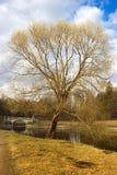 Día de primavera en el parque de Pavlovsk fotos de archivo libres de regalías