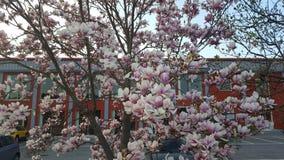 Día de primavera hermoso de las flores de la naturaleza Foto de archivo