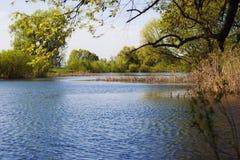 Día de resorte Cerca del río Imágenes de archivo libres de regalías