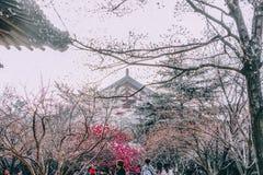 Día de Sakura fotografía de archivo