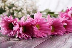 Día de San Valentín blancos del fondo del foco púrpura de la flor Foto de archivo