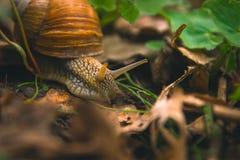 Día de Shell Horns Nature Sunny del caracol Imagen de archivo libre de regalías