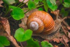 Día de Shell Horns Nature Sunny del caracol Foto de archivo libre de regalías