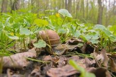 Día de Shell Horns Nature Sunny del caracol Fotos de archivo