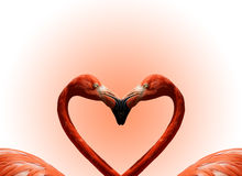 Día de tarjeta del día de San Valentín de la postal Fotografía de archivo