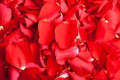 Día de tarjeta del día de San Valentín rojo de pétalos de rosas Fotografía de archivo libre de regalías