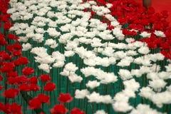 Día de tarjetas del día de San Valentín de Rose Imágenes de archivo libres de regalías