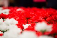 Día de tarjetas del día de San Valentín de Rose Fotos de archivo