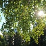 Día de verano en el cementerio Imagen de archivo
