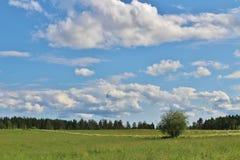 Día de verano en Norrbotten Fotos de archivo