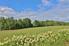Día de verano en Norrbotten Imagenes de archivo