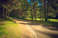 Día de verano en un paisaje del bosque del pino Fotografía de archivo