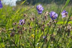 Día de verano en un prado floreciente brillante Fotografía de archivo libre de regalías