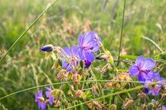 Día de verano en un prado floreciente brillante Imagen de archivo