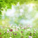 Día de verano de la belleza imagen de archivo
