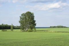 Día de verano rural del paisaje Fotos de archivo libres de regalías