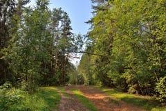 Día de verano soleado del camino forestal de Sandy Fotos de archivo libres de regalías