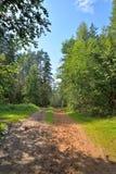 Día de verano soleado del camino forestal de Sandy Fotografía de archivo