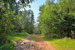 Día de verano soleado del camino forestal de Sandy Imagen de archivo
