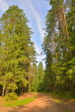 Día de verano soleado del camino forestal de Sandy Imágenes de archivo libres de regalías