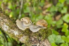Día de verano soleado del caracol de Cople Fotos de archivo