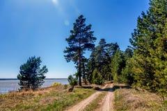 Día de verano soleado en el bosque mezclado imágenes de archivo libres de regalías