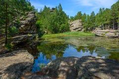 Día de verano, un pequeño lago del bosque Imagen de archivo