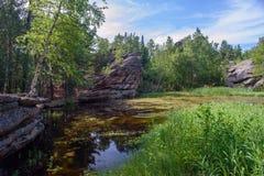Día de verano, un pequeño lago del bosque Fotos de archivo libres de regalías