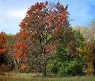 Día del bosque del otoño Imágenes de archivo libres de regalías
