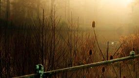 Día del otoño Imágenes de archivo libres de regalías