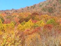 Día del otoño Imagen de archivo libre de regalías