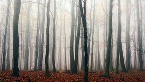 Día del otoño en el bosque encantado Fotografía de archivo