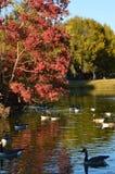 Día del otoño en el parque imagenes de archivo