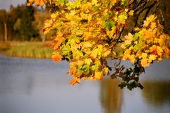 Día del otoño en la línea de costa 11700 Foto de archivo libre de regalías
